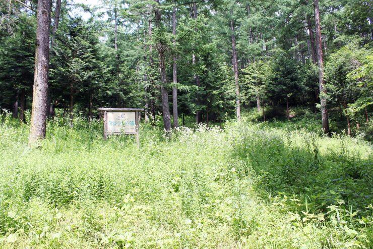 雑草で覆われた森