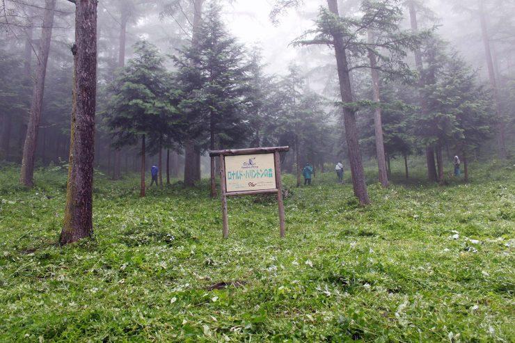 森林整備後の様子