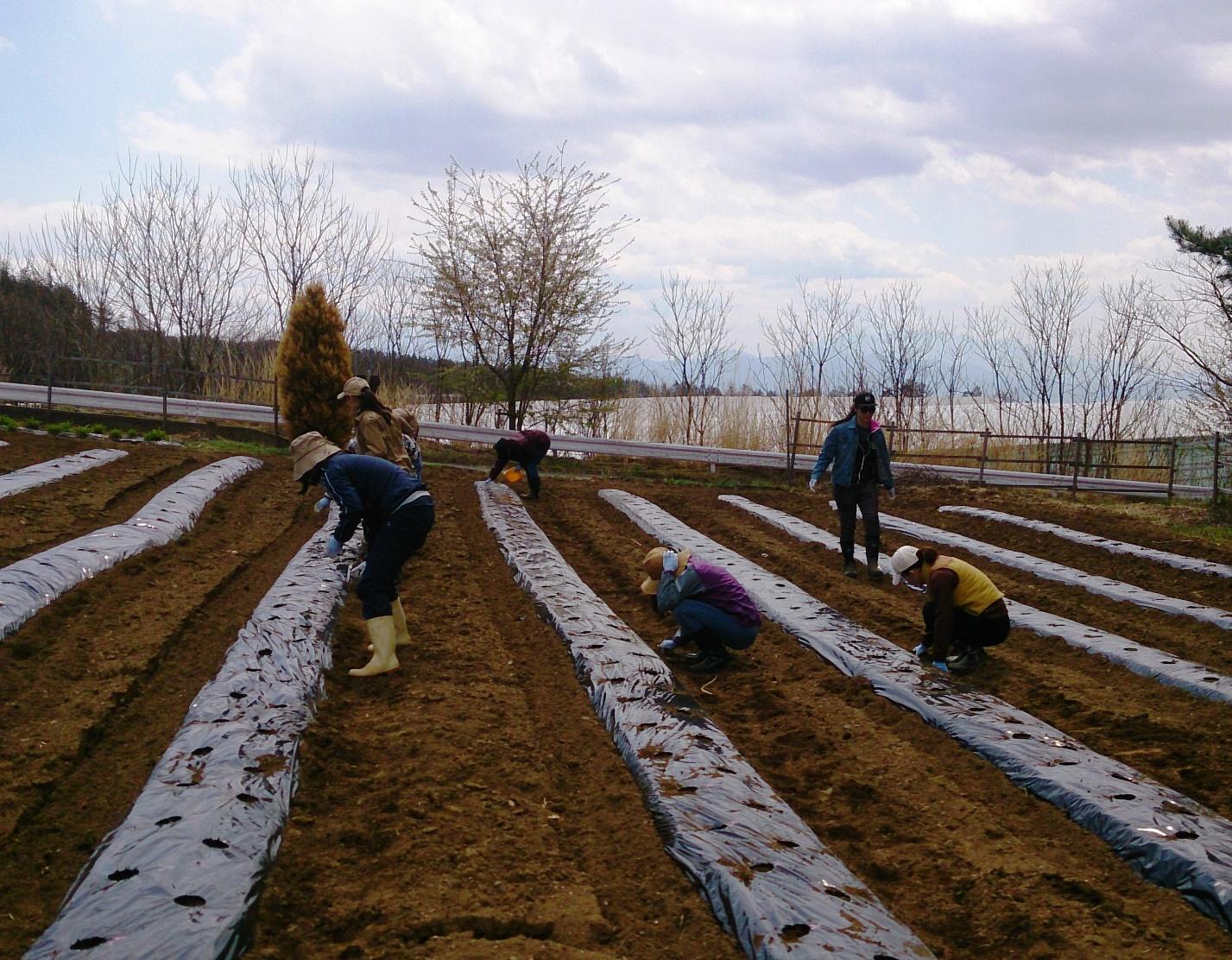 【農場だより】有機ハーブ栽培 今年もスタートしました