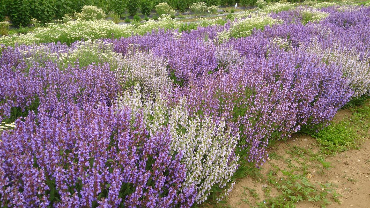 【農場だより】花の季節の始まりです