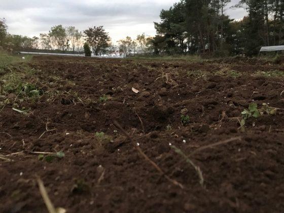 自然に近い圃場 故に耕うん後でもまだ粗さが残ります