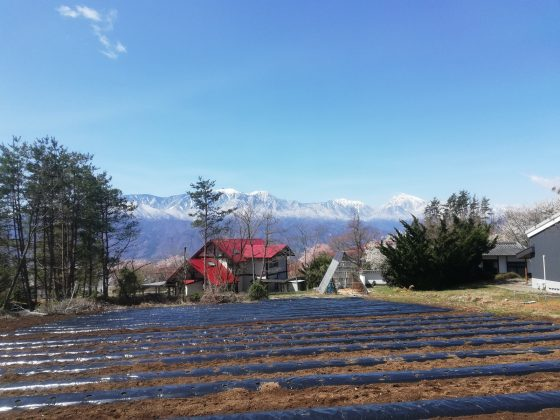 圃場の先に南アルプス連峰と桜
