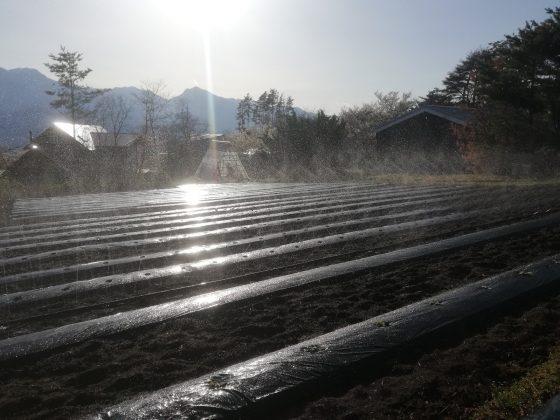 第1圃場配管後の散水テスト きれいに水やりできています。