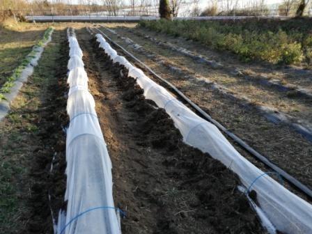 寒くなる前にオウゴンにネットをかけます。